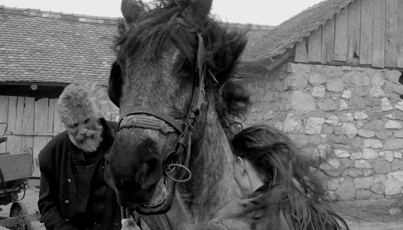 اسب تورین